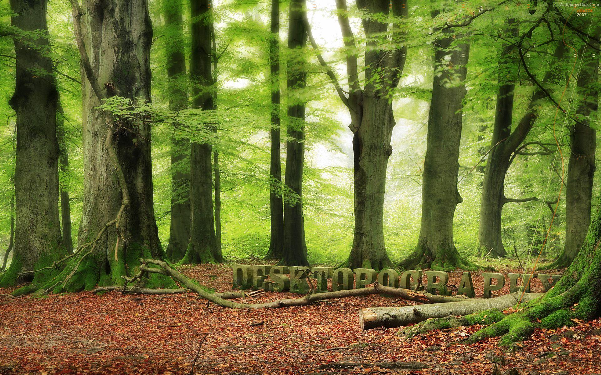 Best woodland desktop wallpapers background collection 1920x1200