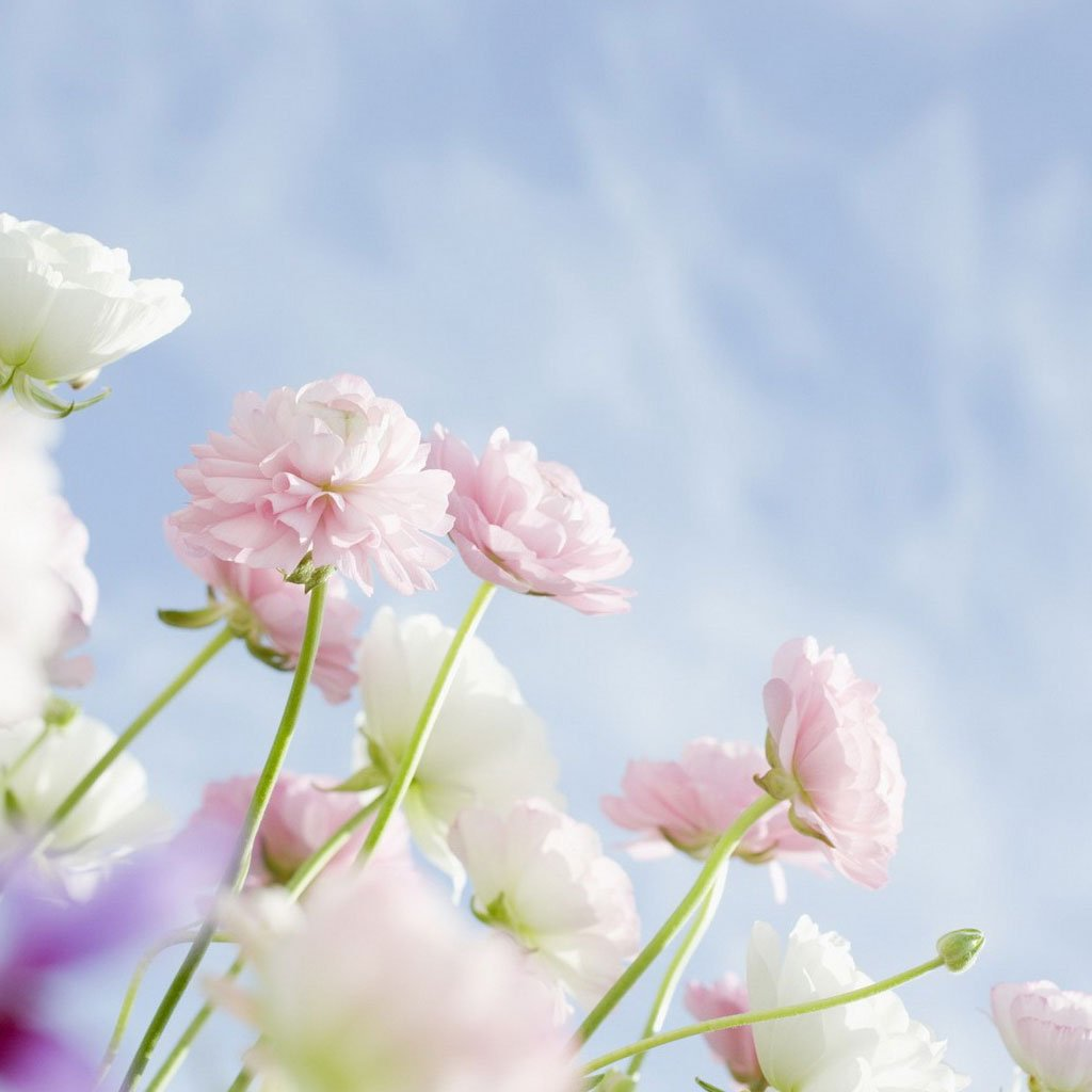 Background Flowers Images
