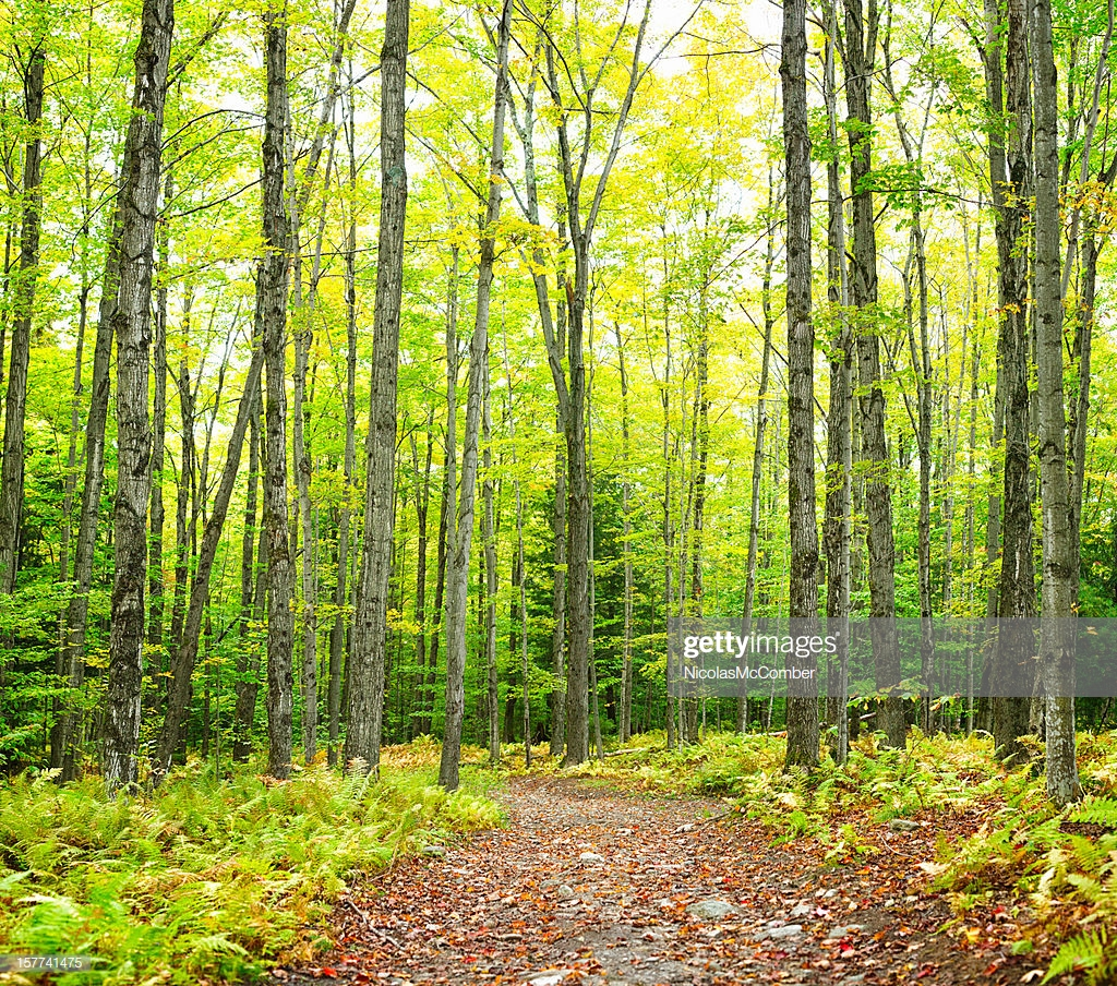 Winding Trail Autumn Forest Nature Background Stock Photo   Getty 1024x904