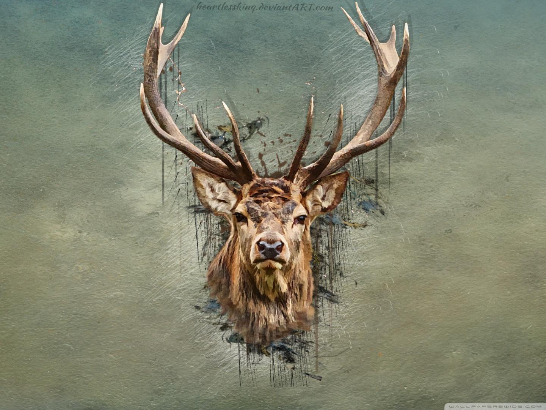 Cool Deer Wallpapers   Top Cool Deer Backgrounds 1440x1080