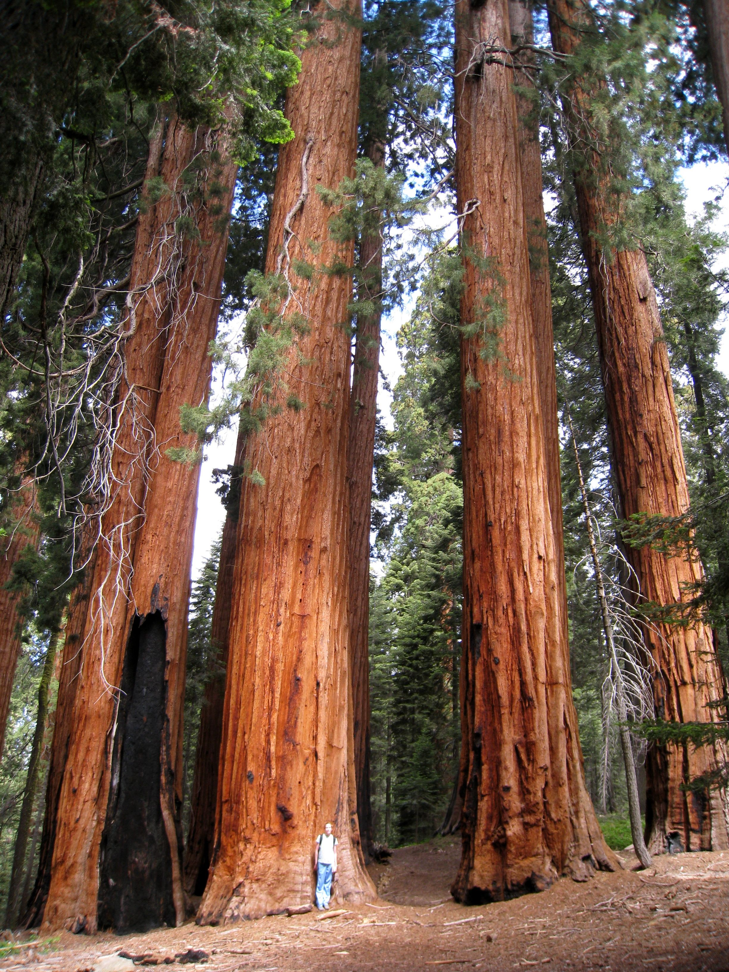 Download Redwood National and States Park is a huge protected area 2448x3264