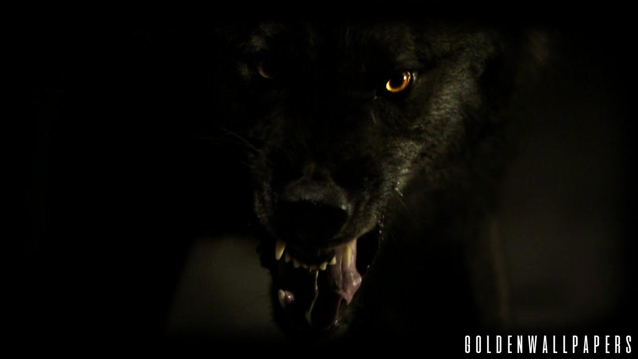 24 Dark Wolves Wallpapers On Wallpapersafari