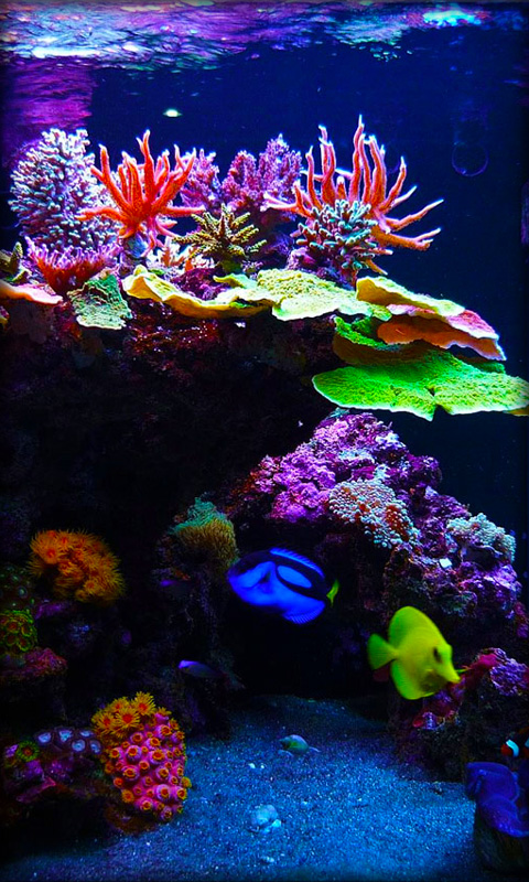 Live Aquarium Wallpaper Aquarium live wallpaper 480x800