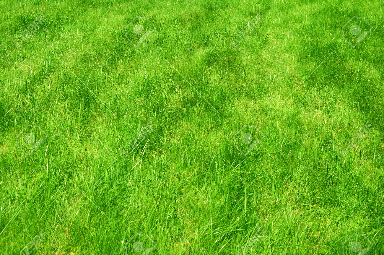 Fresh Green Manicured Lawn Close Up Clipped Green Grass 1300x863