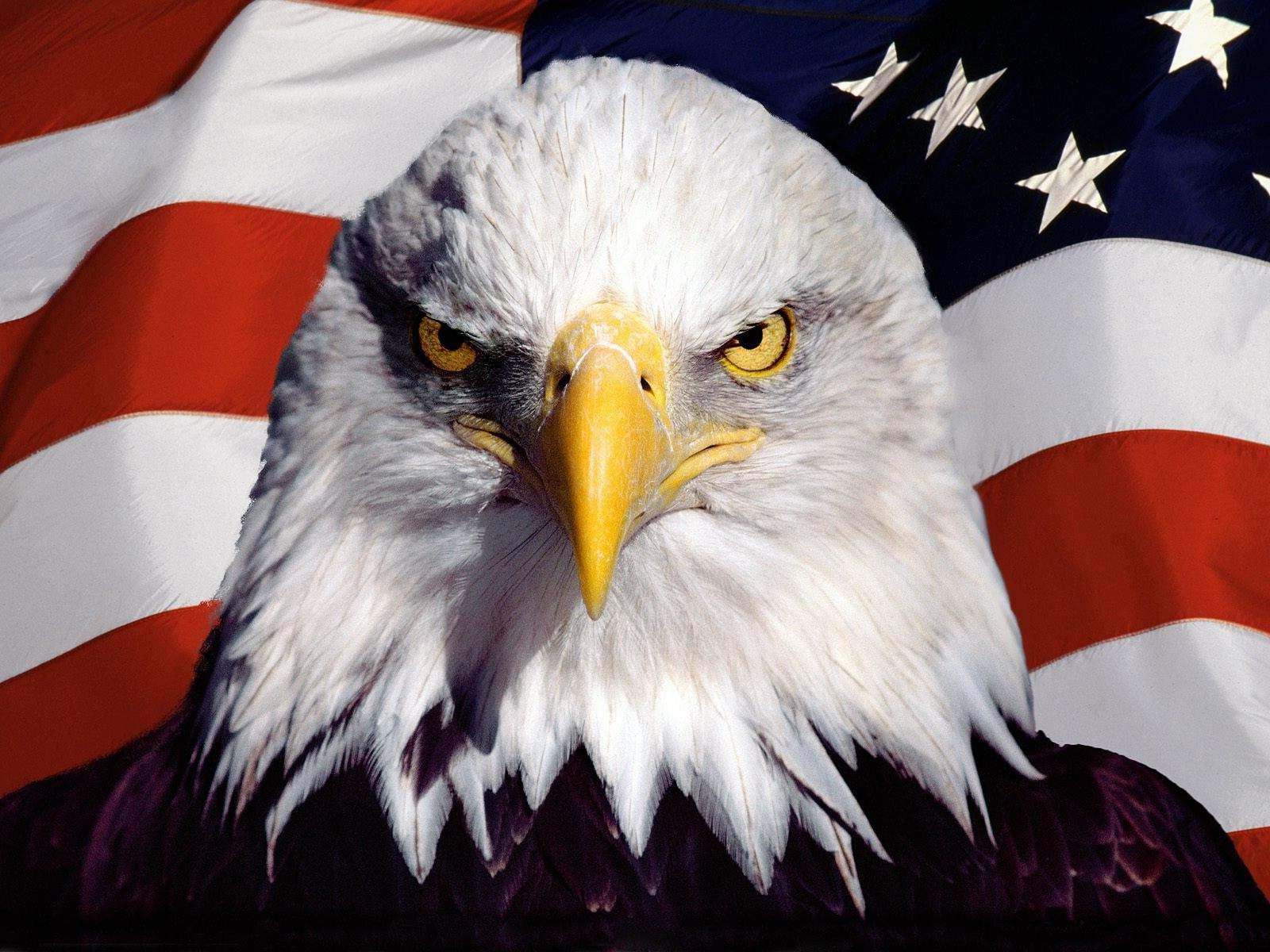 Kop van een arend voor de Amerikaanse vlag 1600x1200