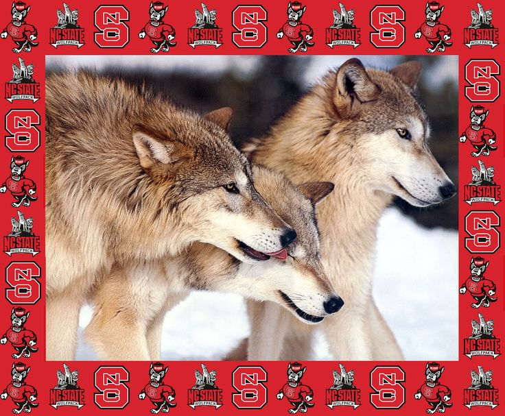 Wolfpack with NC State border desktop background 736x607