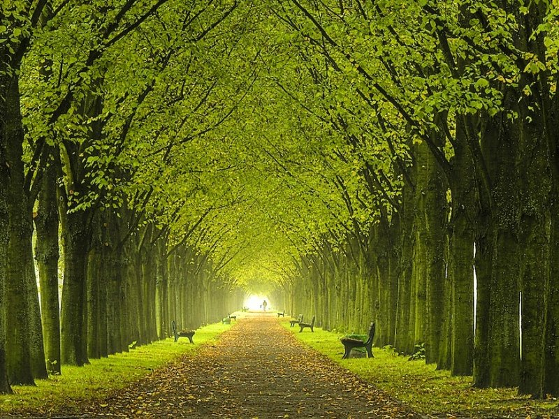preview Beautiful Trees Wallpaper Download 800x600