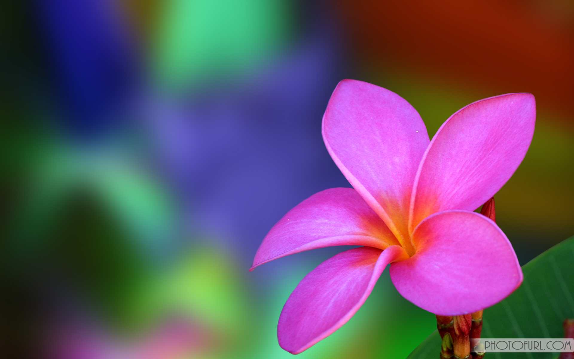 full screen flower wallpaper wallpapersafari