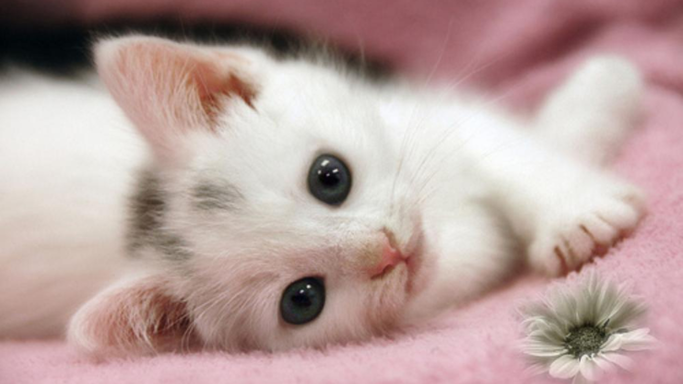 Cute Kitten Wallpaper 1366x768