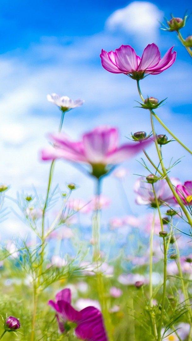 Hd Flower Wallpapers 14388 610x1084