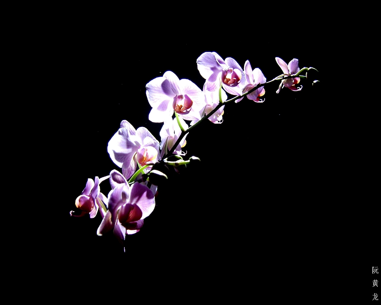 Purple Orchid Wallpaper Nice Purple Orchid Flower hd 1280x1024
