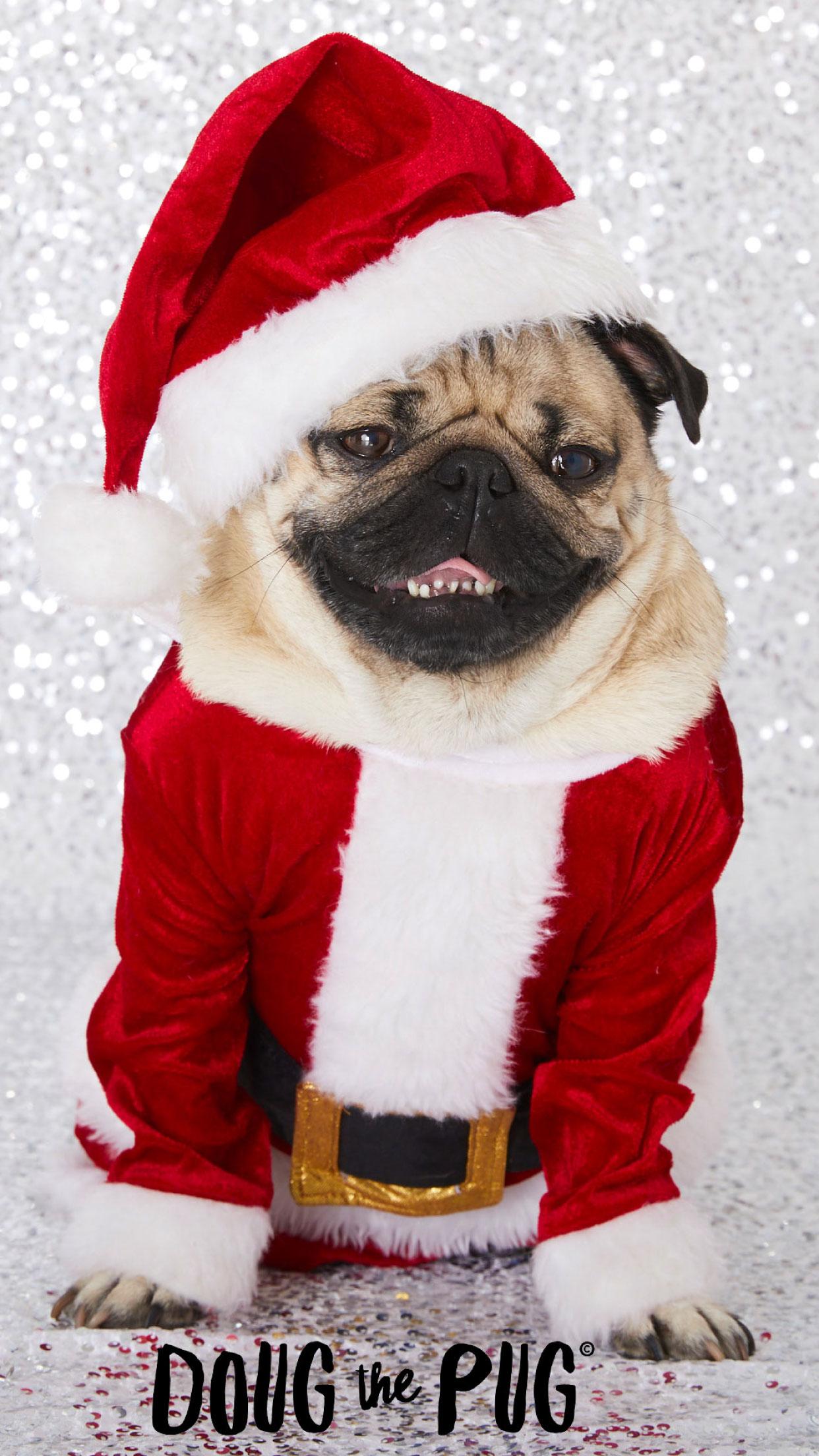 FREE Doug the Pug Christmas Wallpapers   ClairesBlog 1242x2208