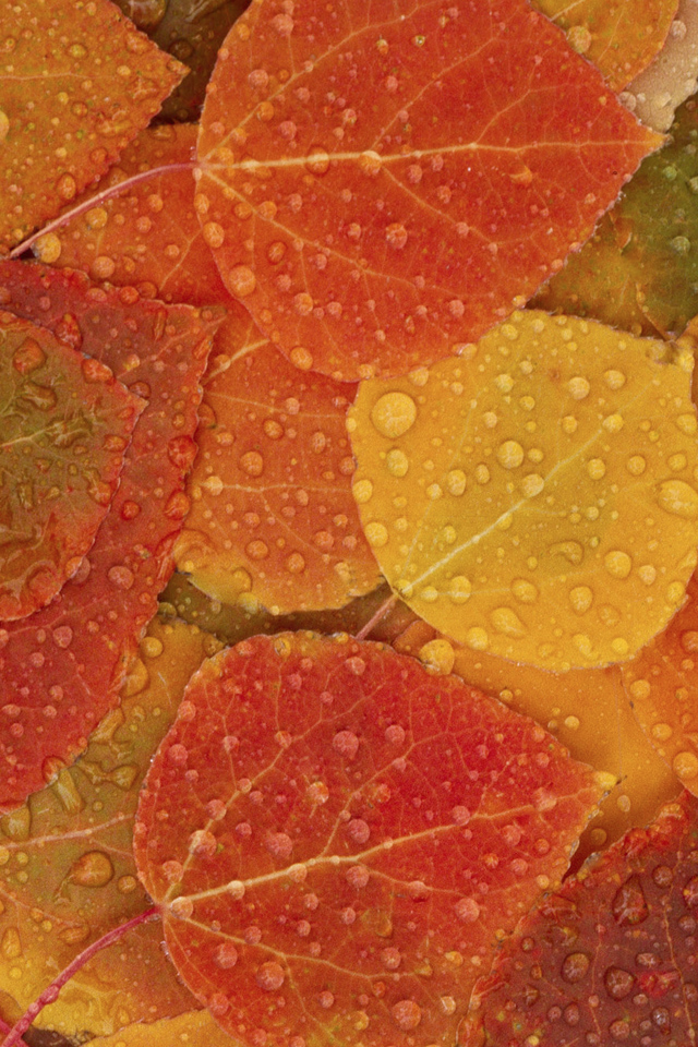 Autumn Leaves iPhone 4s Wallpaper Download iPhone Wallpapers iPad 640x960