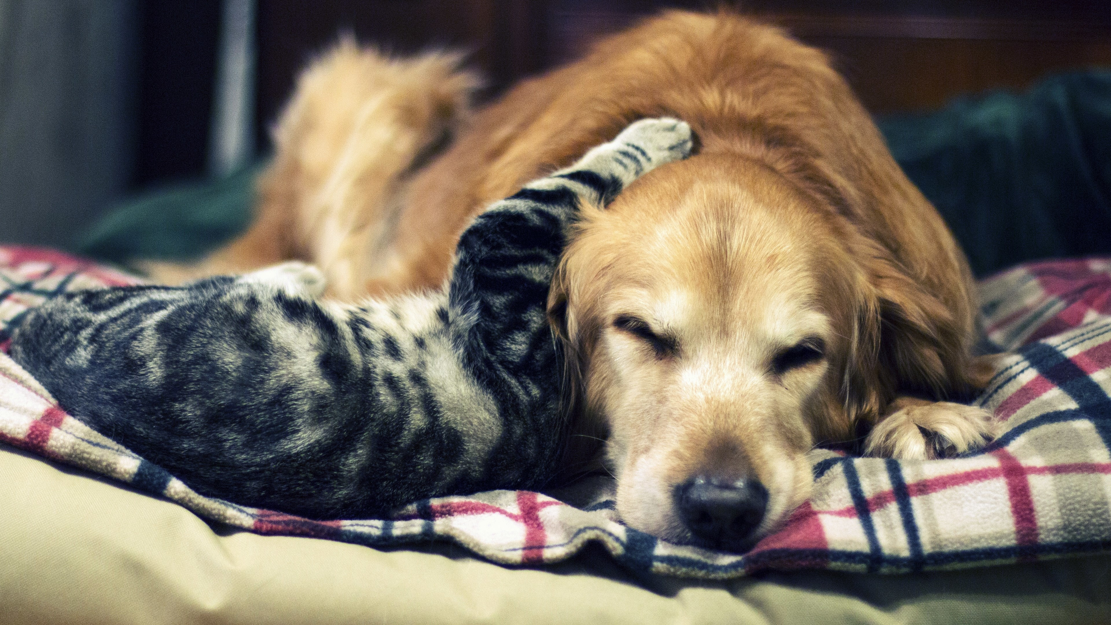 Cat and Dog Wallpaper 3840x2160