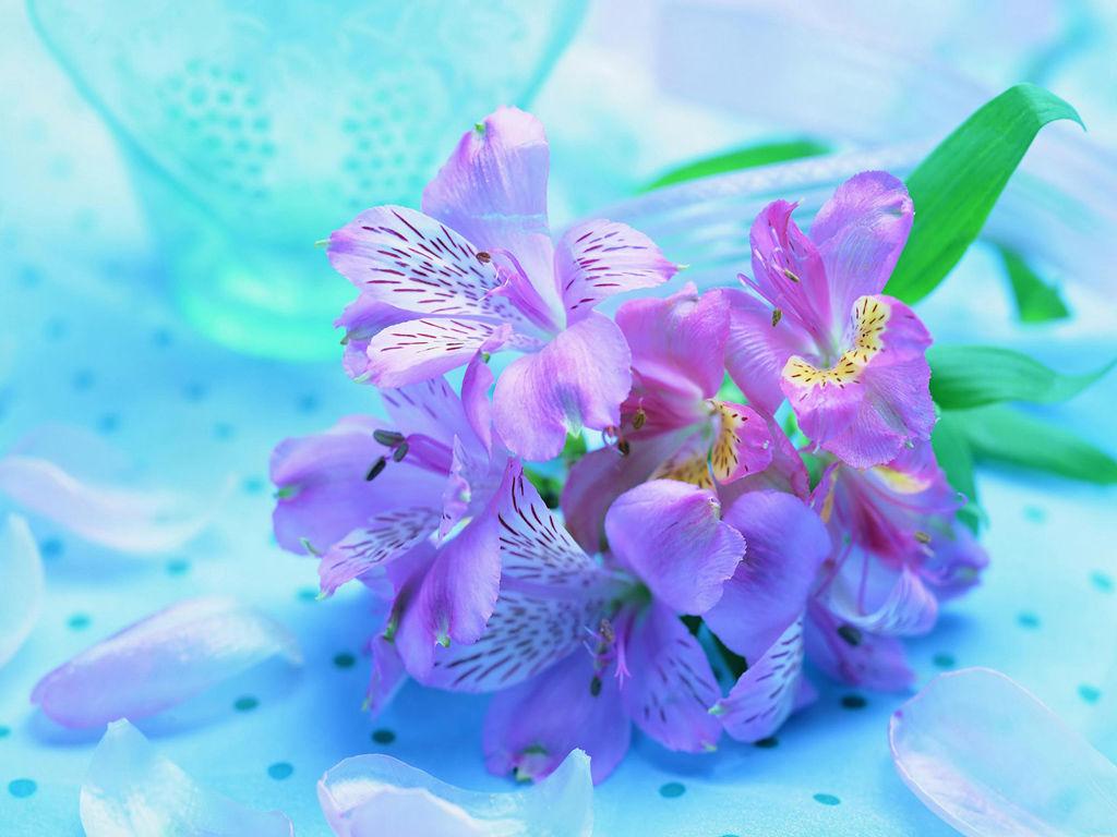 Beautiful Fresh Flowers   Light Purple Flowers 220213   HD 1024x768