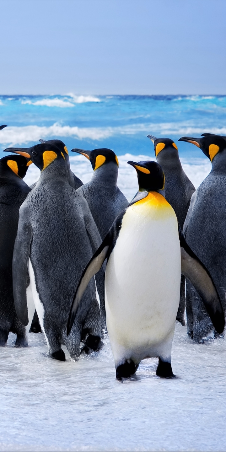 AnimalPenguin 720x1440 Wallpaper ID 717848   Mobile Abyss 720x1440