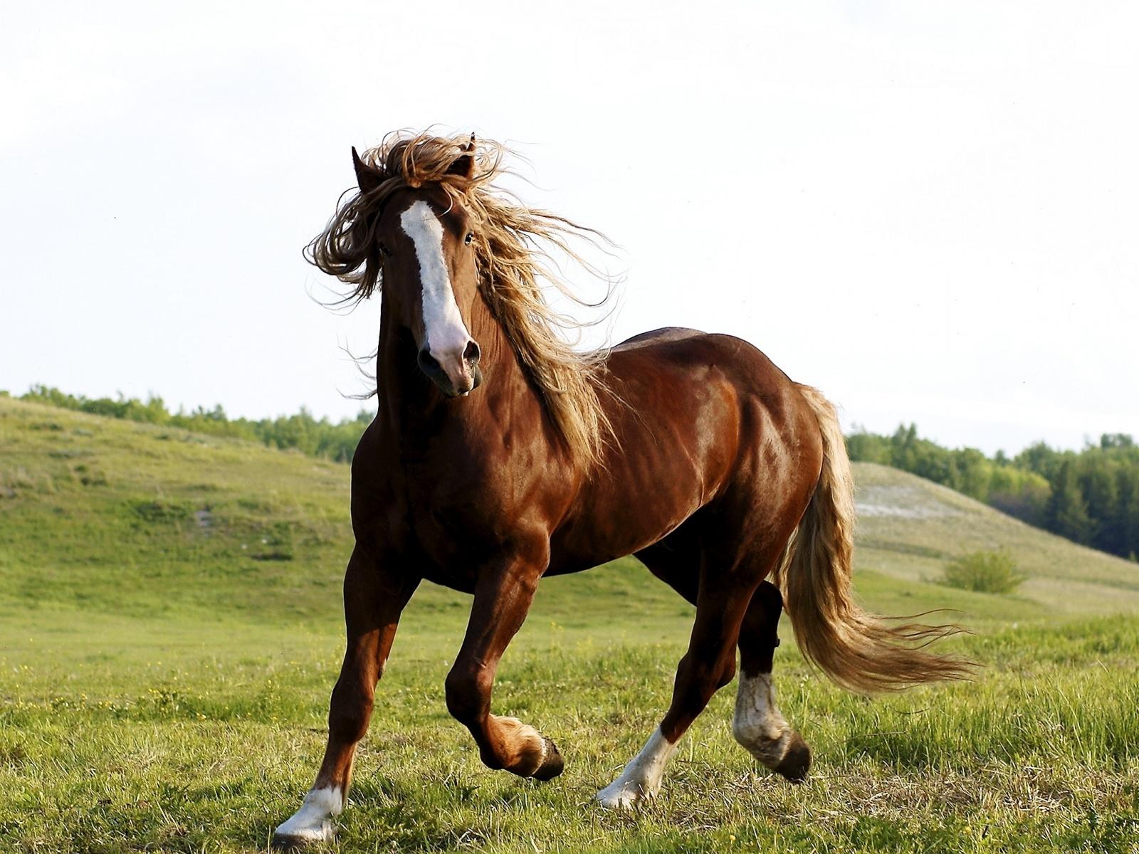 photos brown horse photos brown horse photos brown horse photos 1600x1200