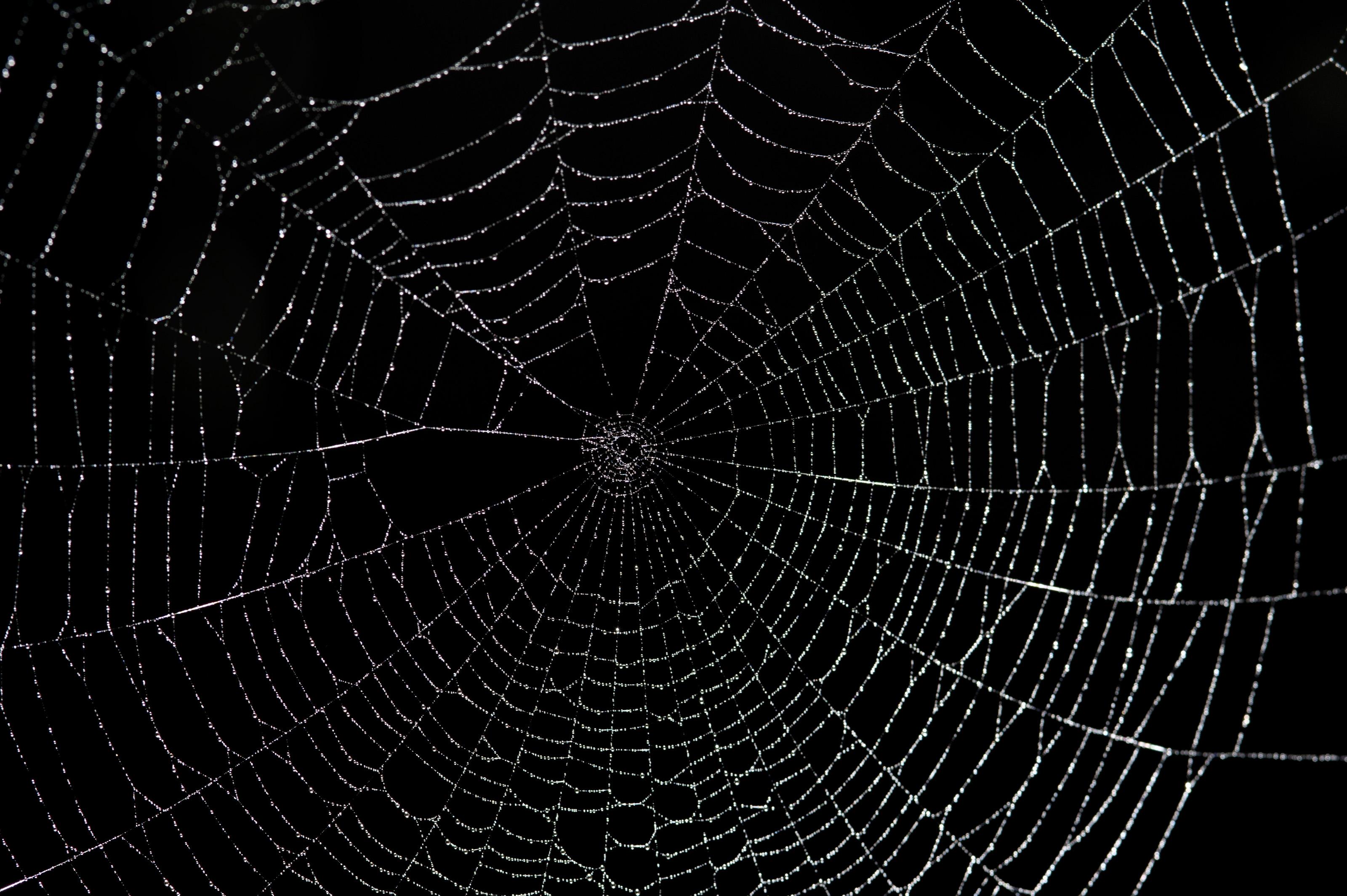 Pics Photos   Spider Web Background 3200x2129