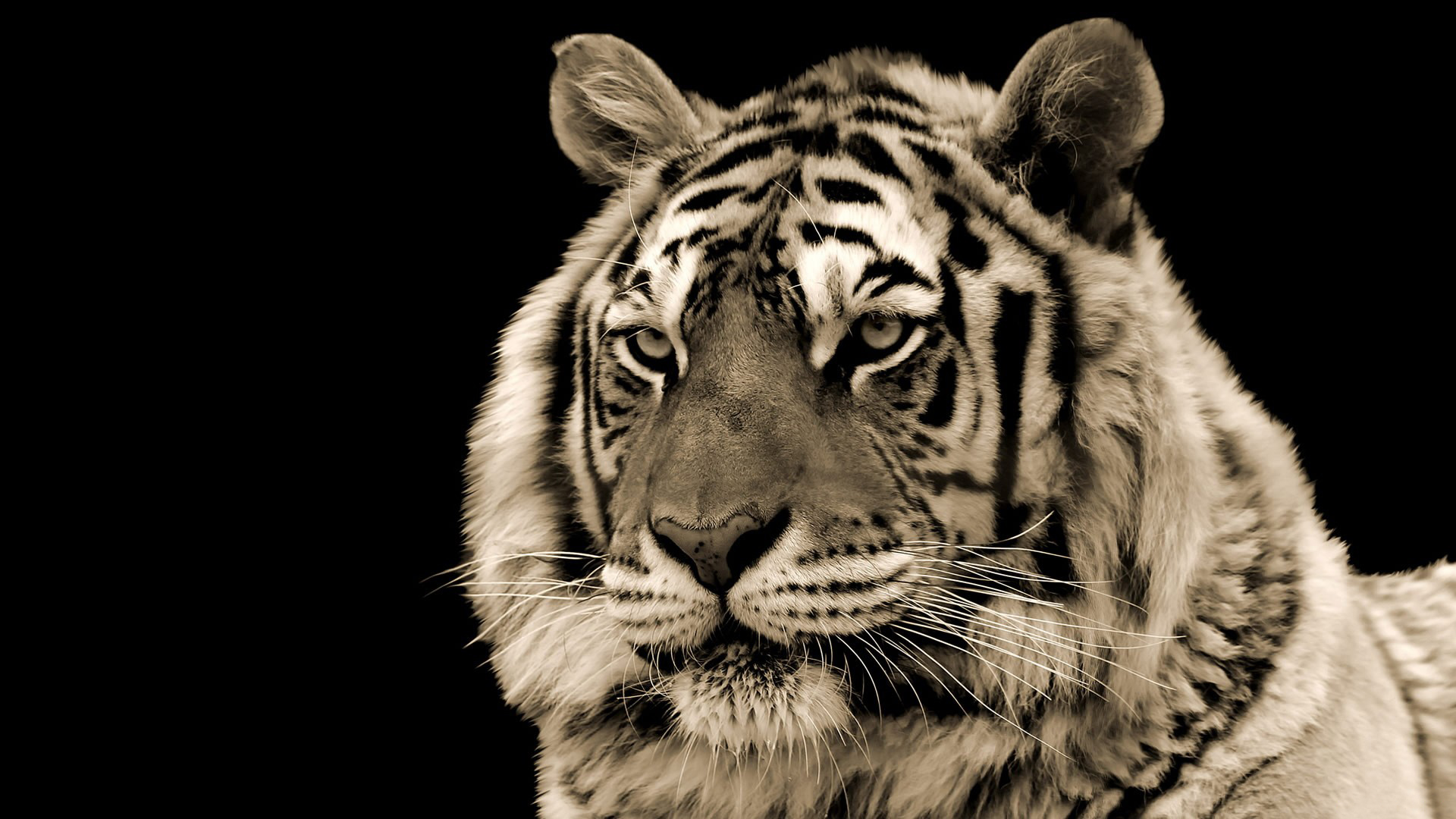 49 animated tiger wallpaper on wallpapersafari - Moving animal wallpapers ...