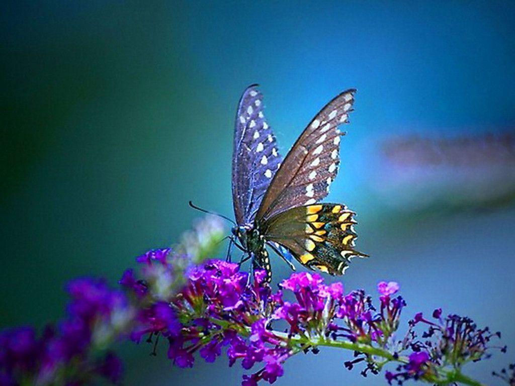 Butterfly Desktop Wallpapers   Top Butterfly Desktop 1024x768