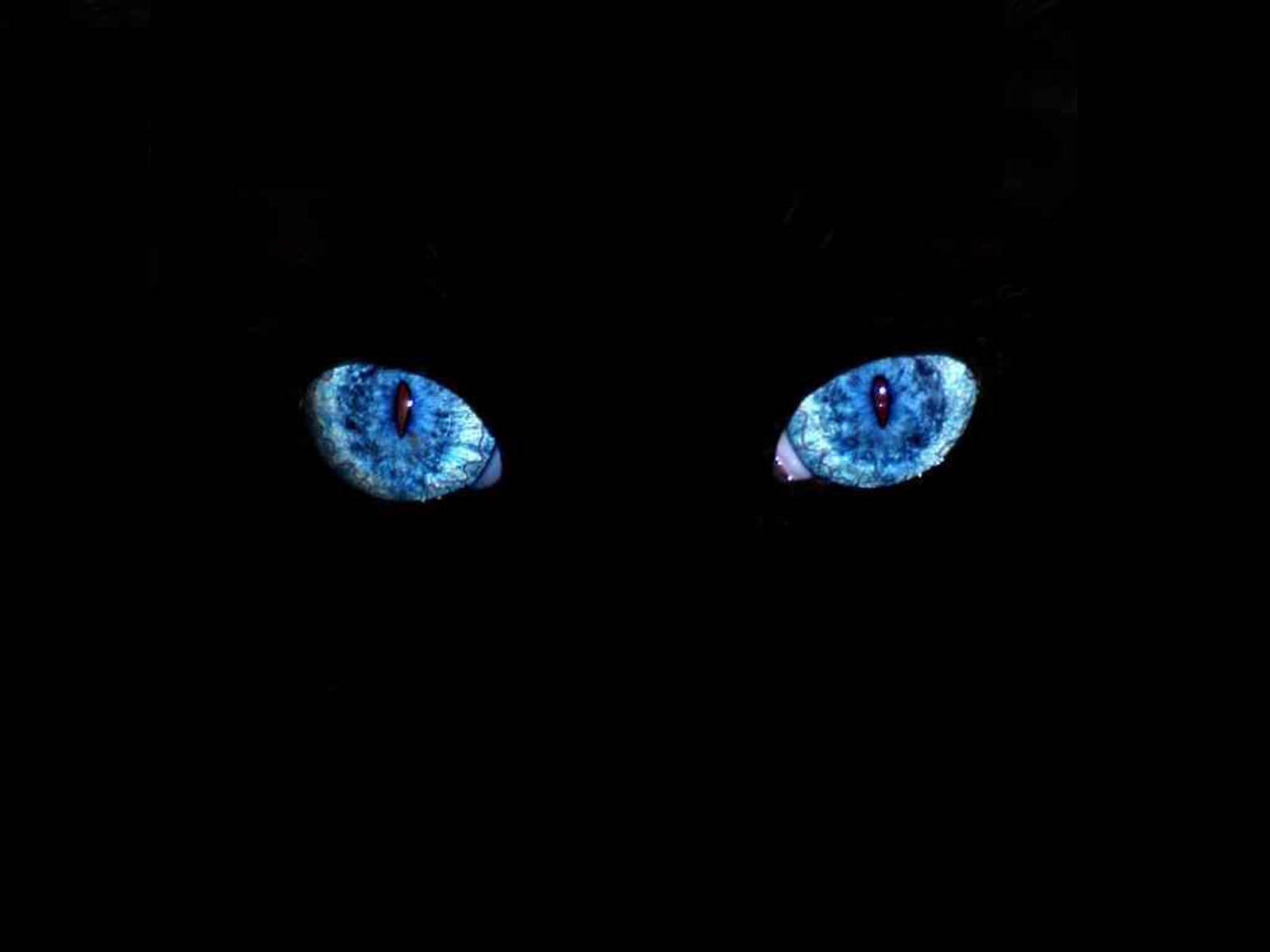 Tag Black Cat Blue Eyes Wallpapers Images Paos and Pictures for 1600x1200