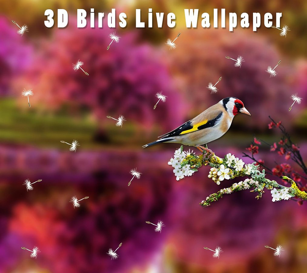 3D Birds Live Wallpaper   Applications Android et Tests   AndroidPIT 1013x900