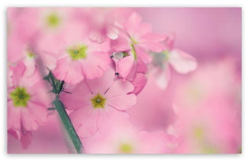Tiny Pink Flowers HD desktop wallpaper High Definition Fullscreen 510x330