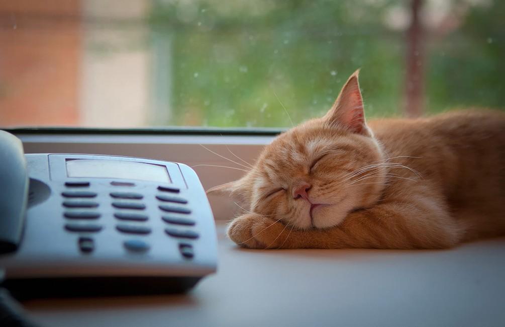 Cat Phone Sleep Window Sill Waiting   Stock Photos Images 1005x650