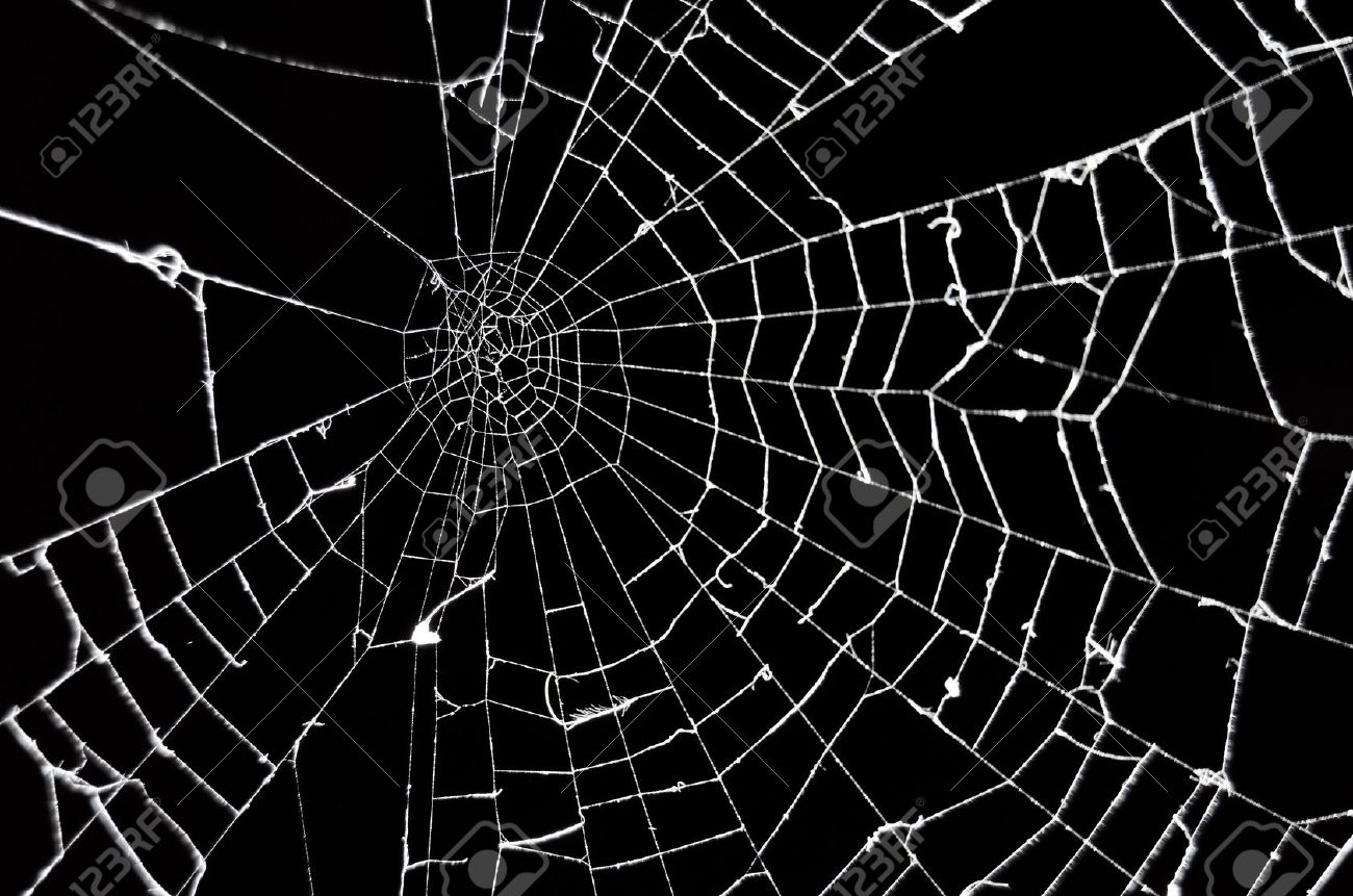 Facts Funny Stuff about Animals Nature Spider Web Background Black 1300x861