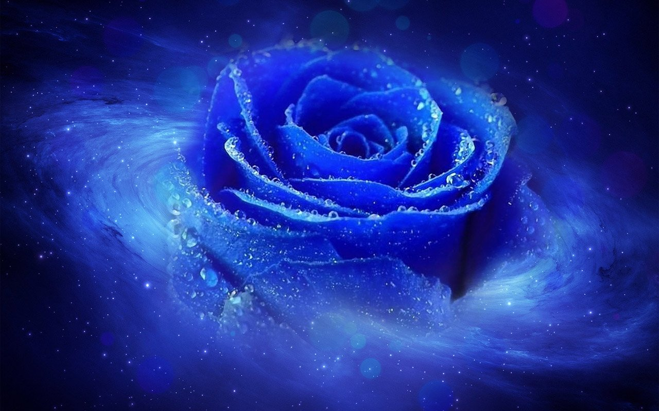 Hd 1280x800 Cool 3d Blue Rose Desktop Wallpapers Backgrounds 1280x800