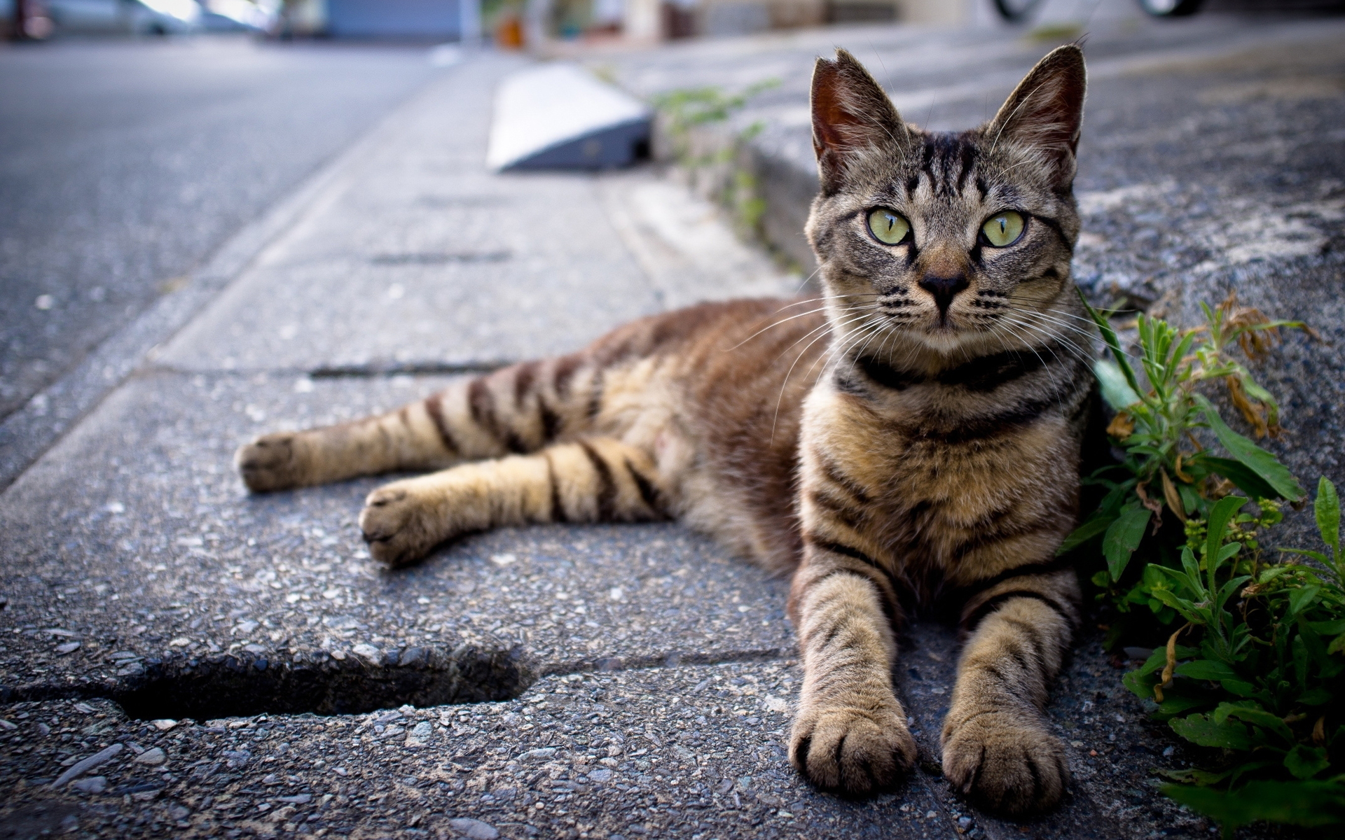 Cat Sitting At Roadside HD Wallpaper 1920x1200