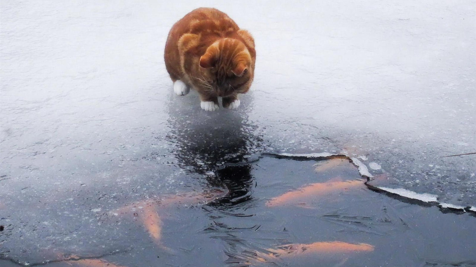 Red Cat Looks Old Window Winter Stock Photo - Image of ...  |Winter Scenes With Cats