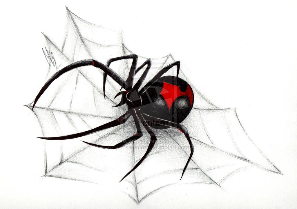 Funny Stuff about Animals Nature Black Widow Spider Wallpapers 1024x721