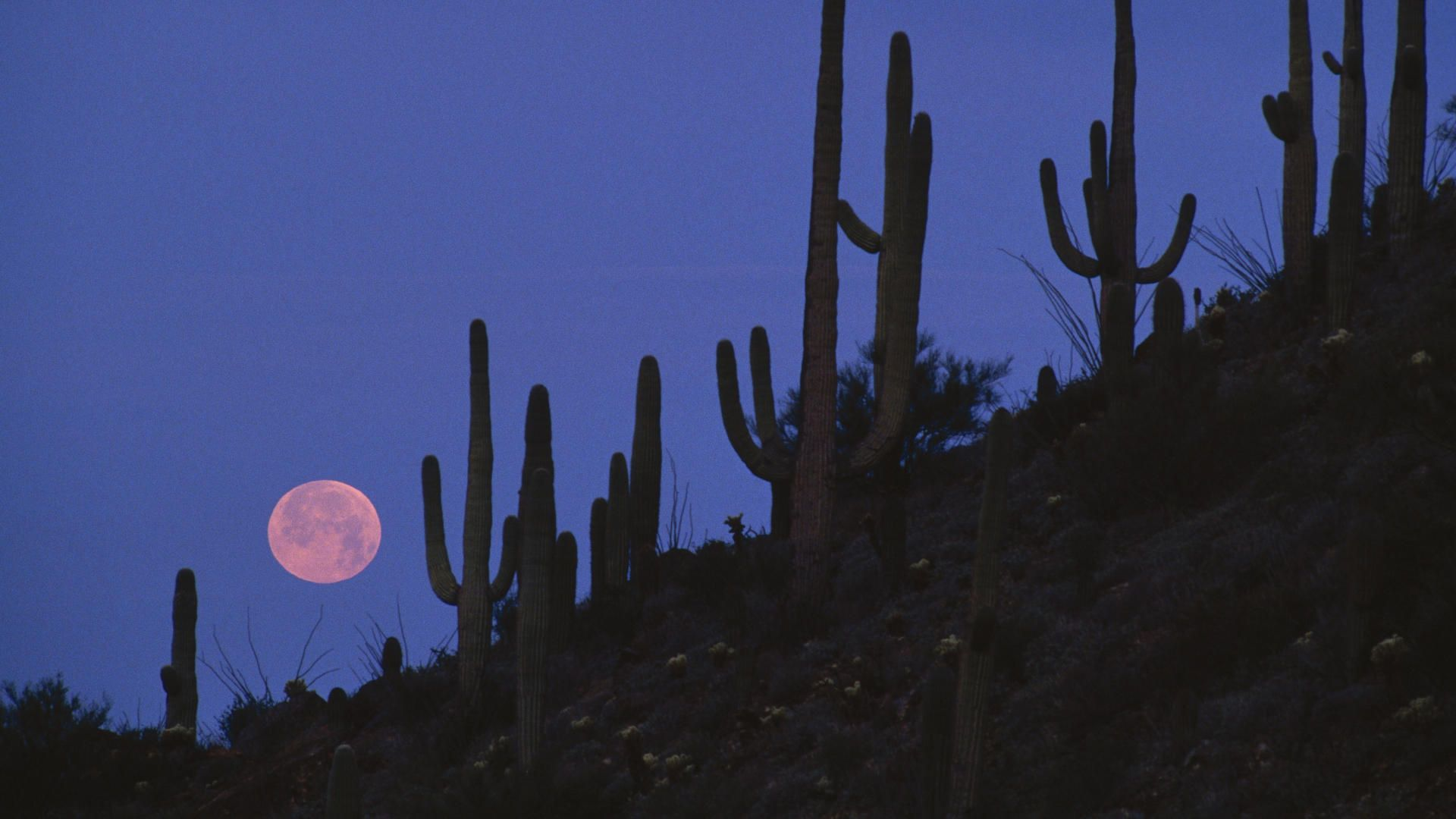 Full Moon Saguaro National Monument Arizona widescreen wallpaper 1920x1080