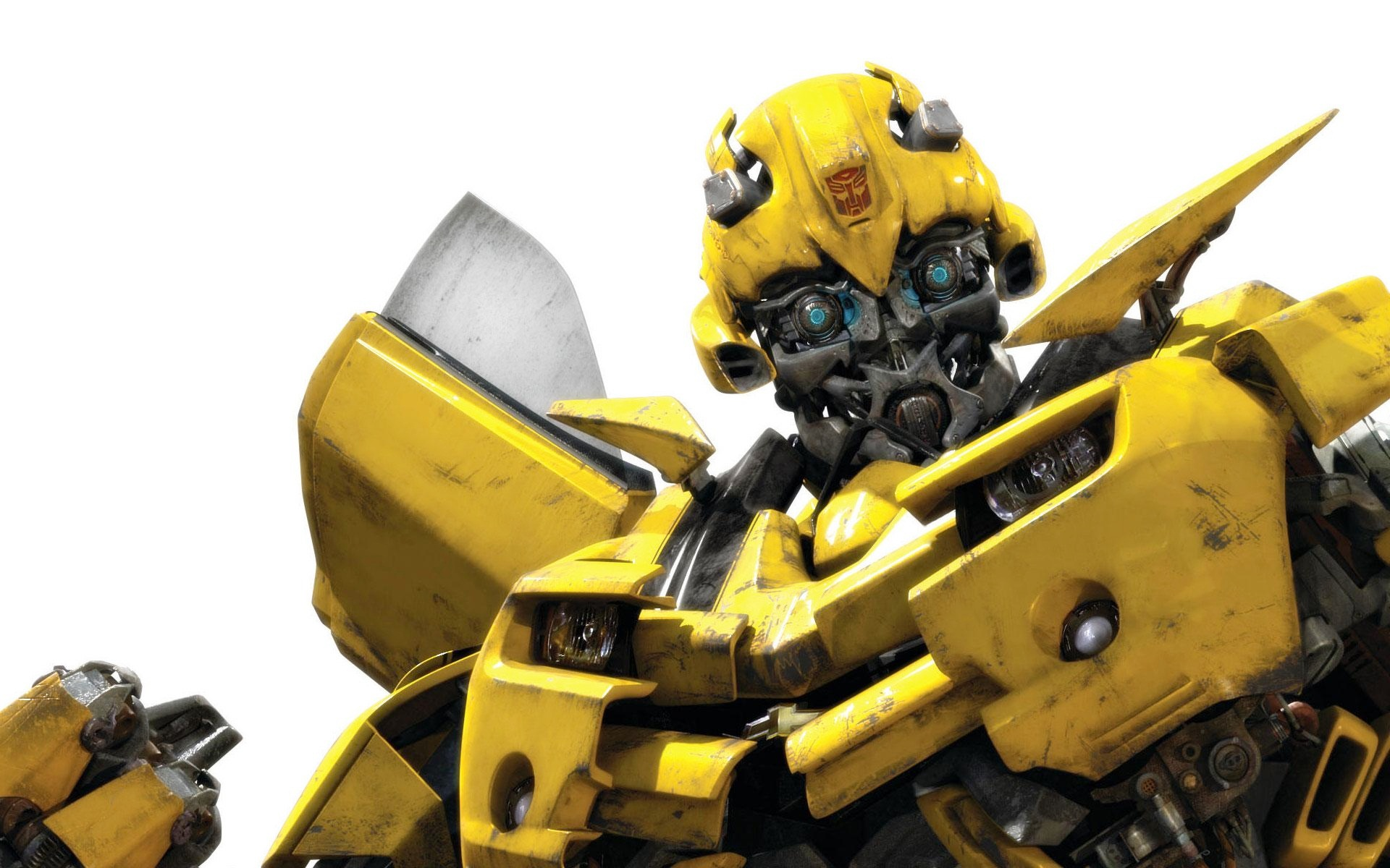 Bumble Bee Wallpapers HD Wallpapers 1920x1200