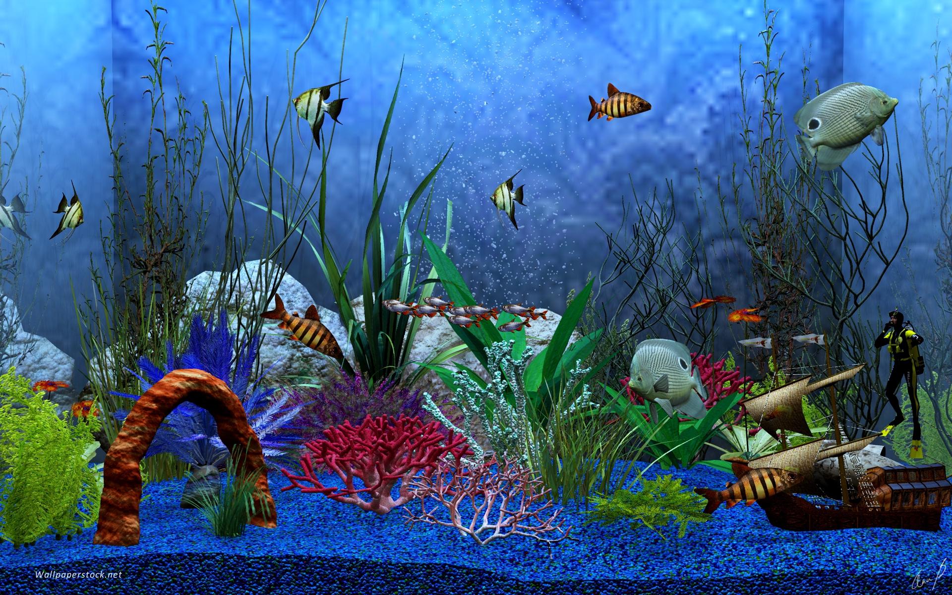 Fish in aquarium desktop wallpaper - Animated Aquarium Desktop Wallpaper Www Wallpapers In Hd Com