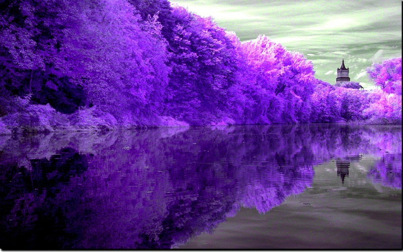 forest lake PURPLE REFLECTION Nature Lakes HD Desktop Wallpaper 800x500