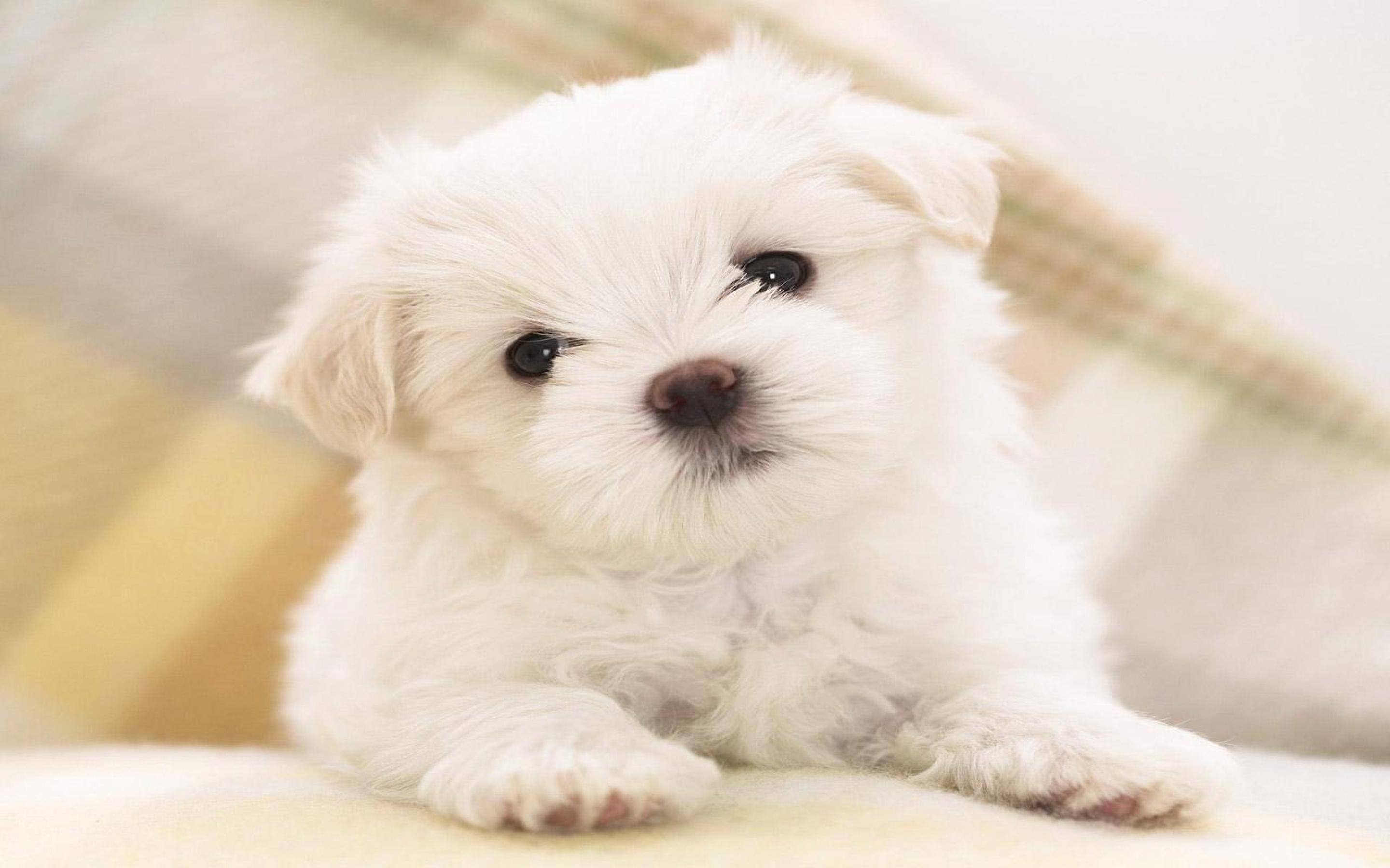 Cute Dog HD Wallpapers for all resolution HD 2880x1800 Cute 2880x1800