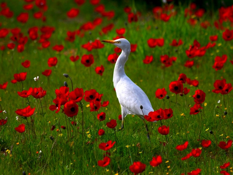 Spring Desktop Birds PC Android iPhone and iPad Wallpapers 800x600
