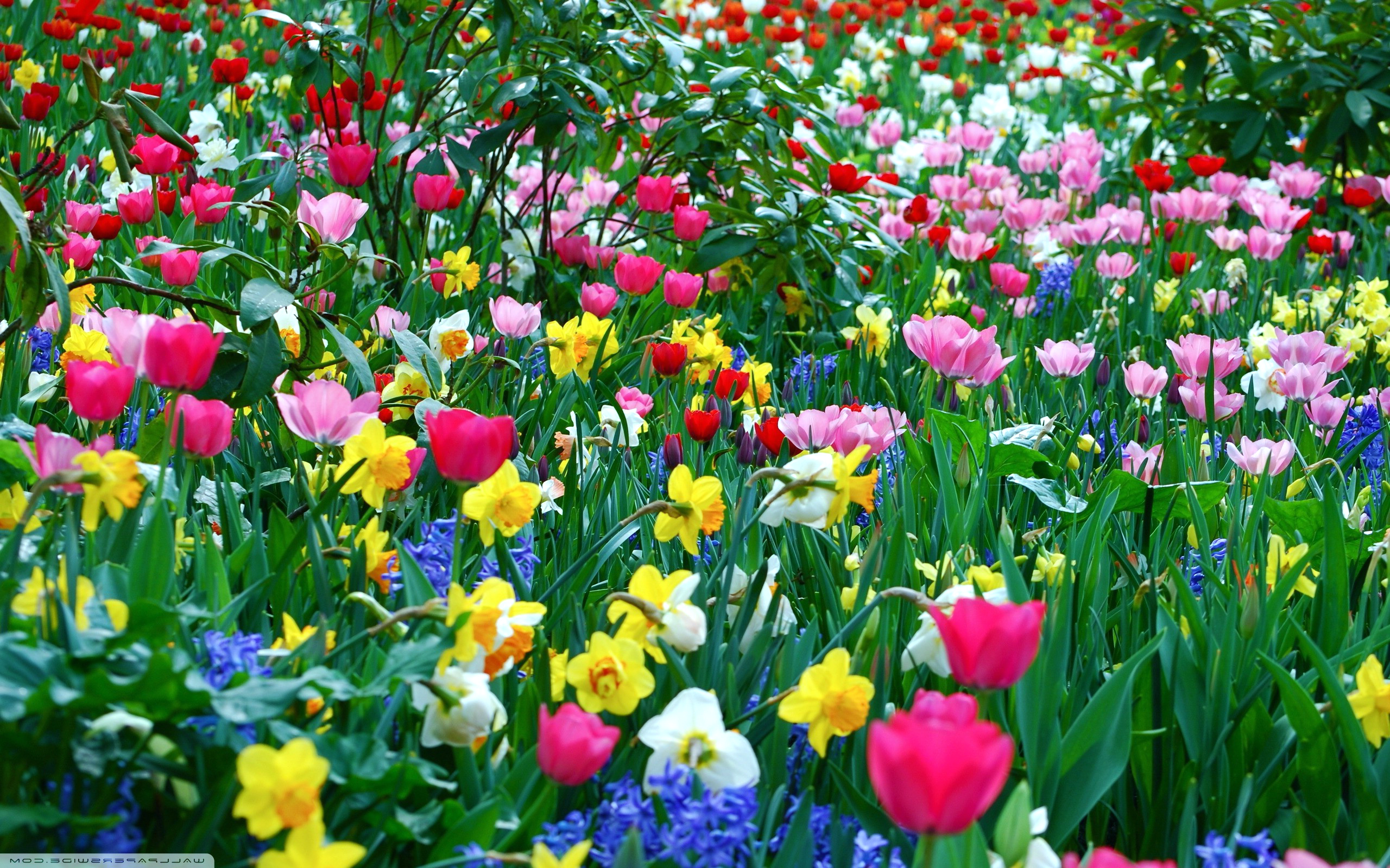 Spring flowers wallpaper flower wallpaper background hd desktop 2560x1600
