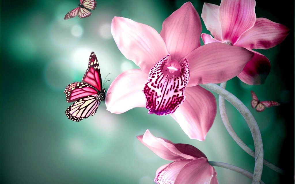 Butterflies Flower   HD Animal Wallpapers   Butterflies Flower 1024x640
