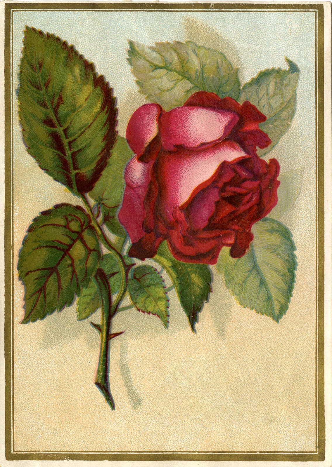 Victorian Images   Beautiful Red Rose   The Graphics Fairy 1136x1600