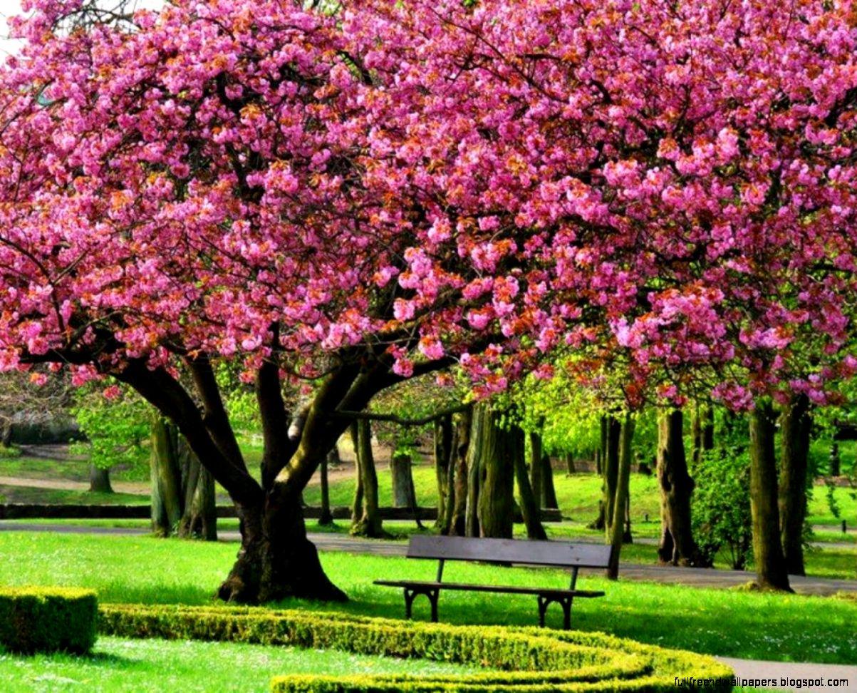 42+ Free Spring Tree HD Wallpaper on WallpaperSafari