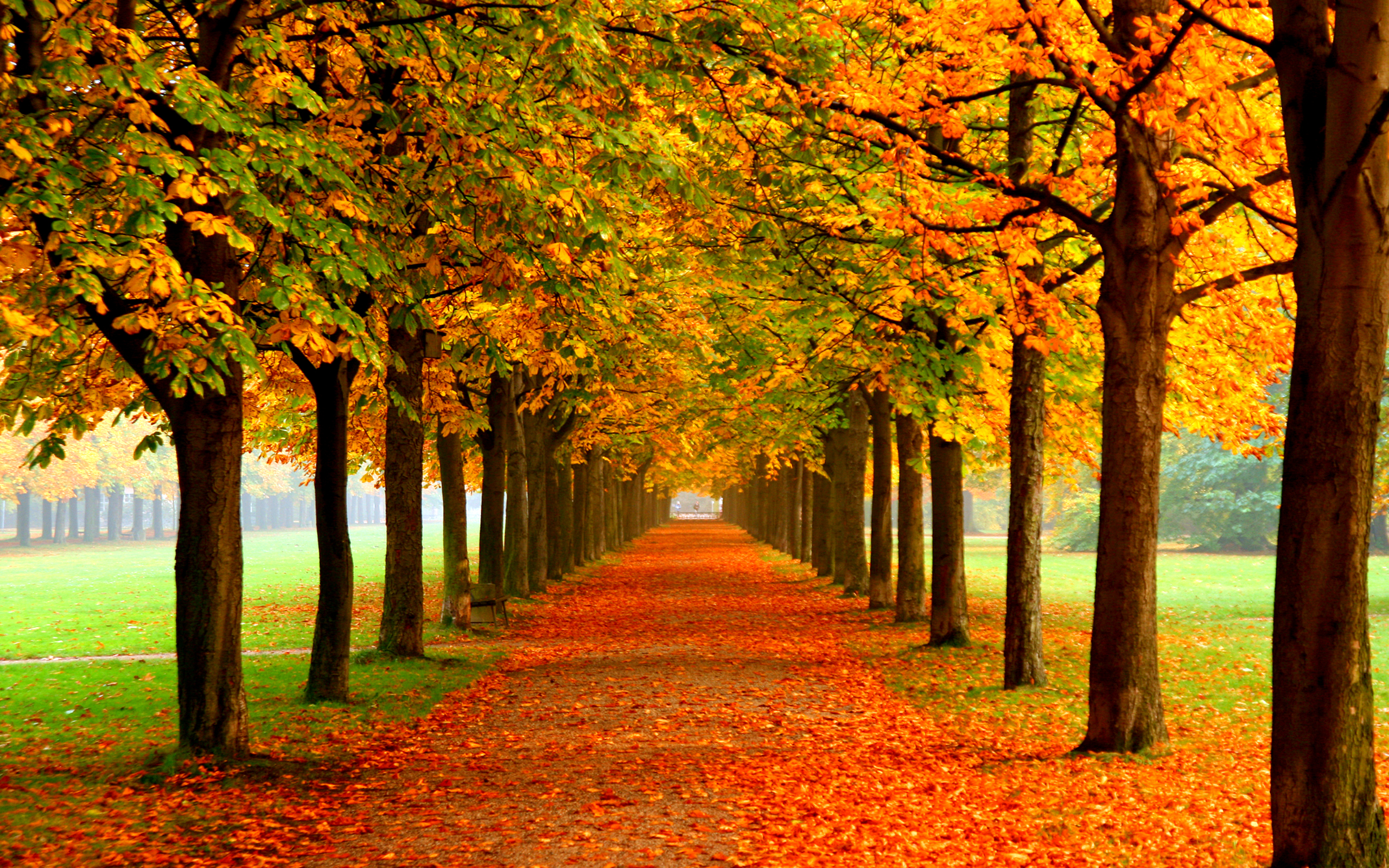 Autumn Colors Wallpaper Images & Pictures - Becuo
