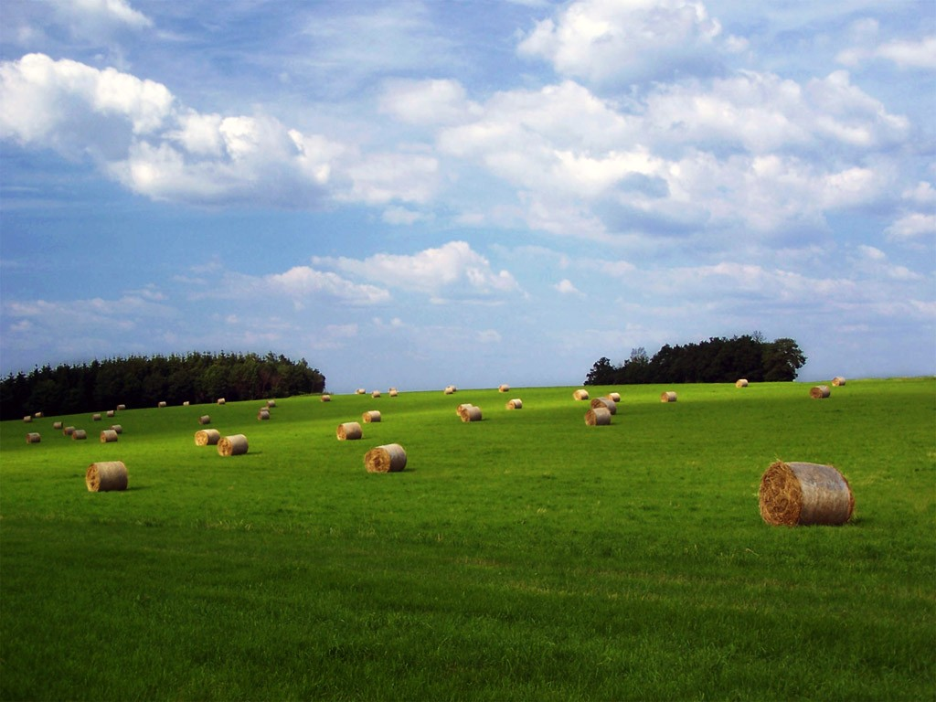 Farm Wallpaper 1280800 1024x768