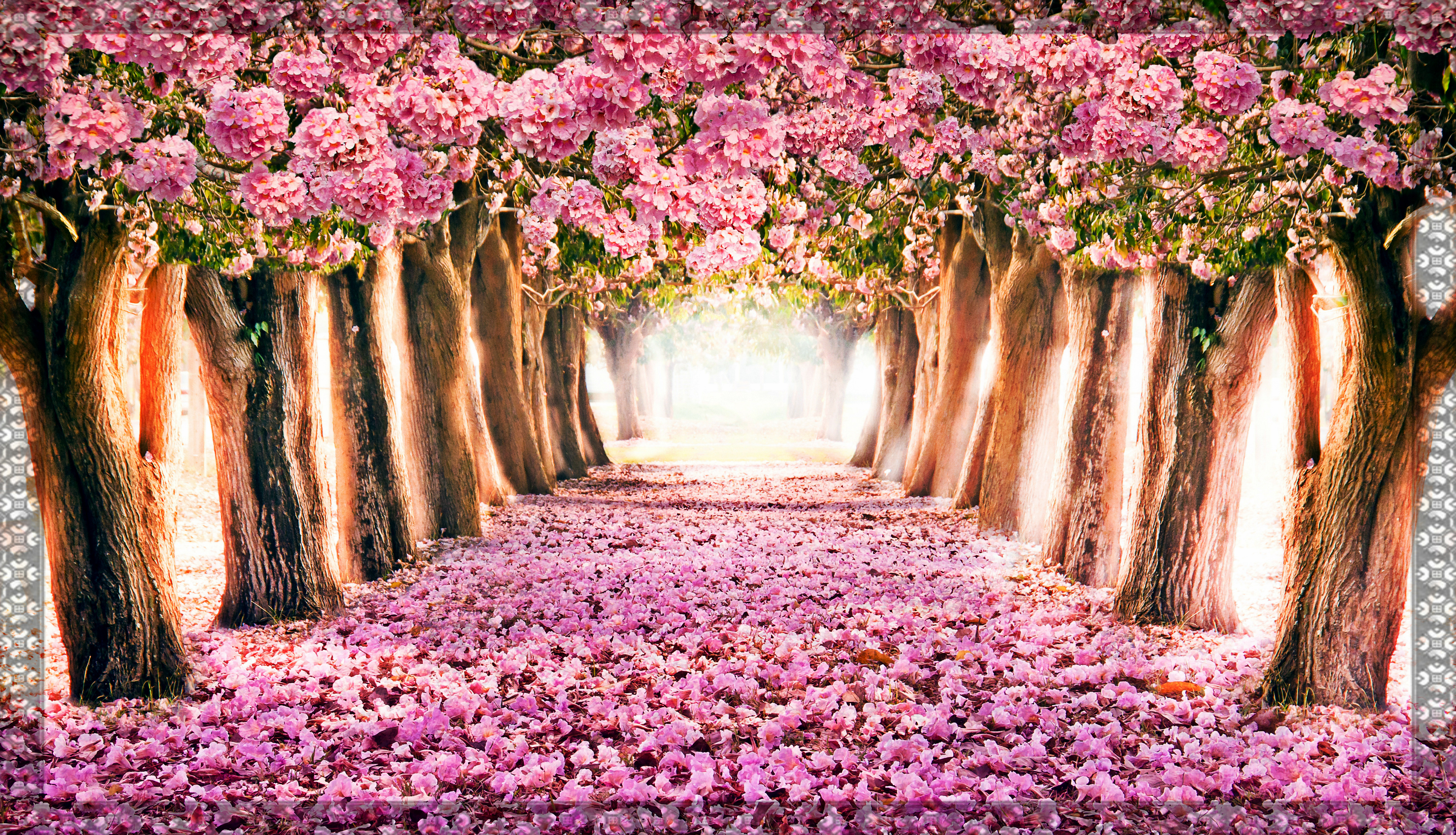 Spring Flowers Wallpapers 4000x2295