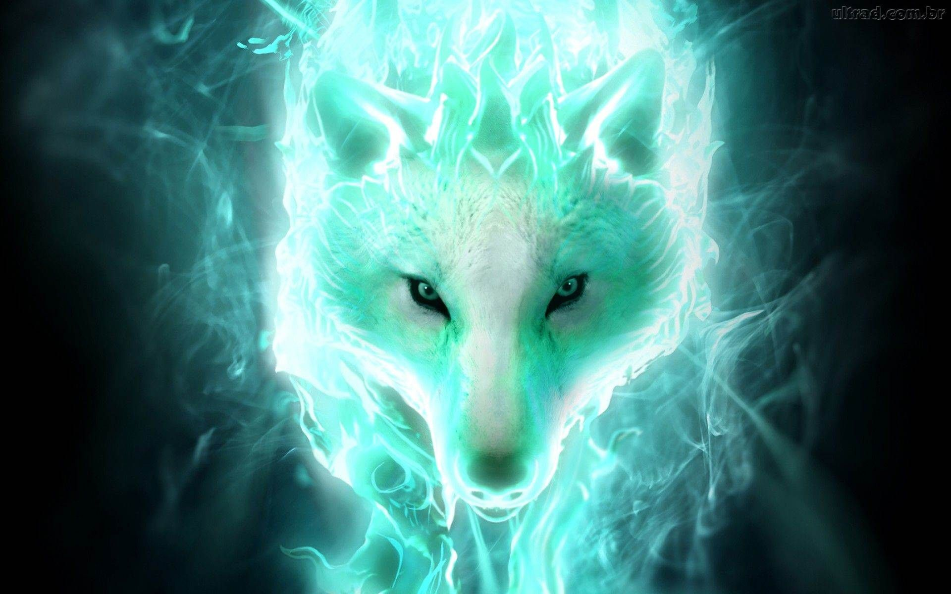 Wolf HD Wallpapers Backgrounds Wallpaper 19201200 Cool Wolf 1920x1200