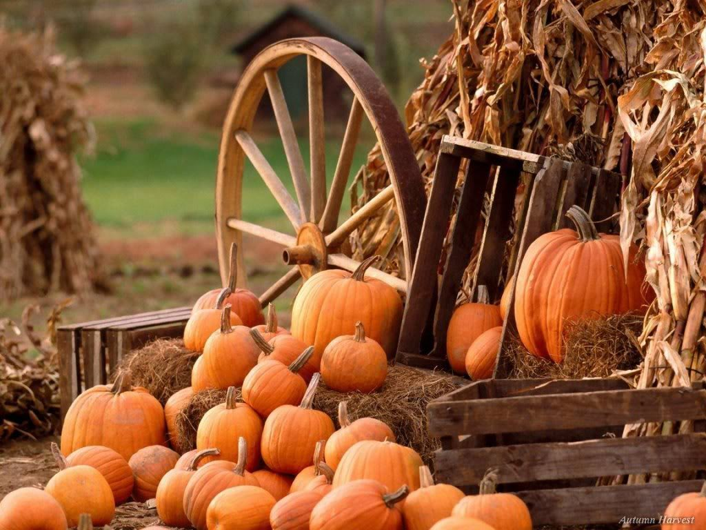 sure to include a pumpkin pie and pumpkin carving add a little extra 1024x768