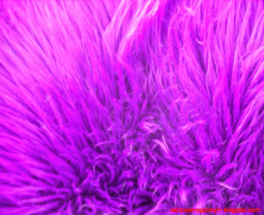 Purple Fur Wallpaper Wallpapers Gallery 870x706