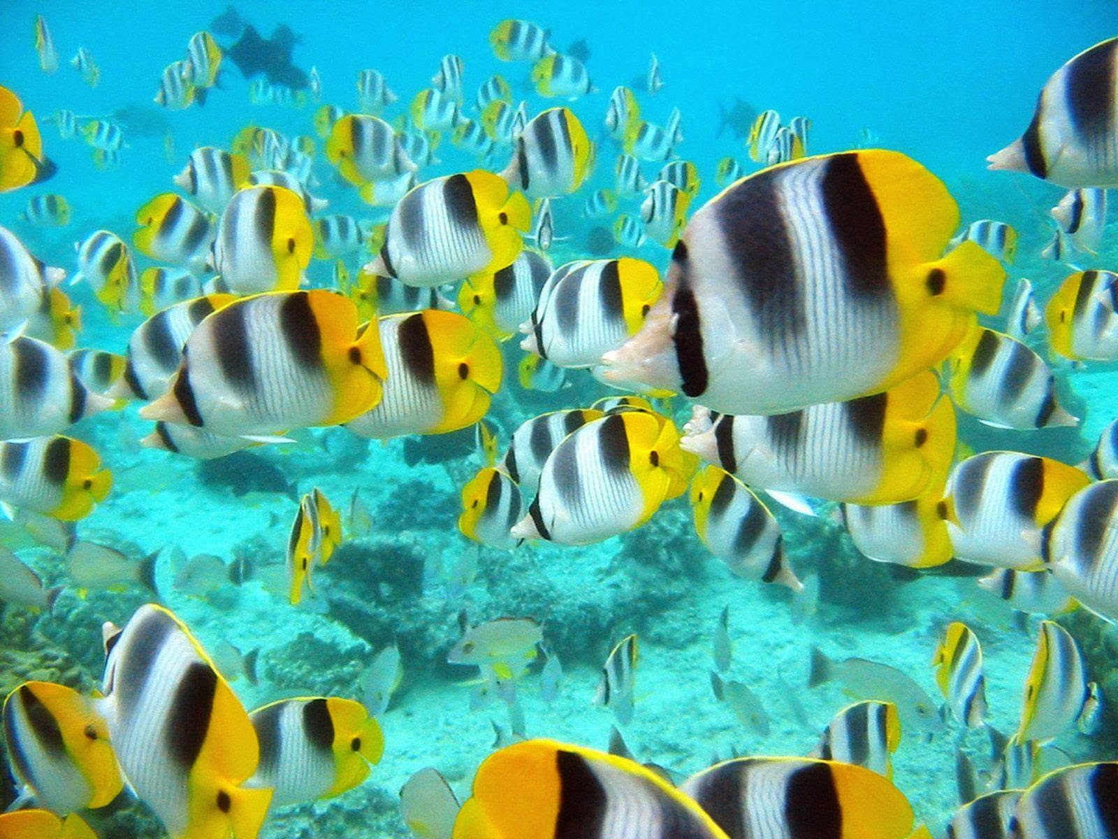 Desktop live fish wallpaper 3d hd picture design download 1600x1200